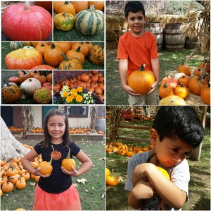 Irvine Park RailRoad's 10th annual Pumpkin Patch